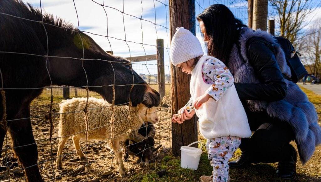 EKKA Public Holiday Farm Animals