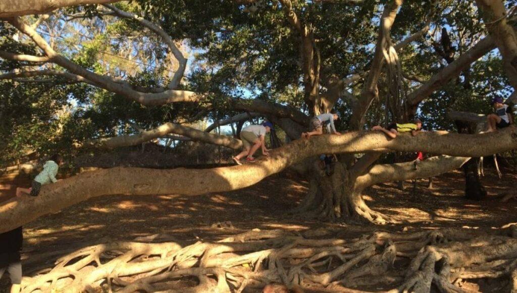 EKKA Public Holiday Tree Climbing